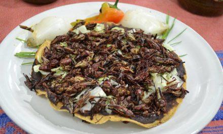 Tostada de chapulín en Tlayudas El Negro