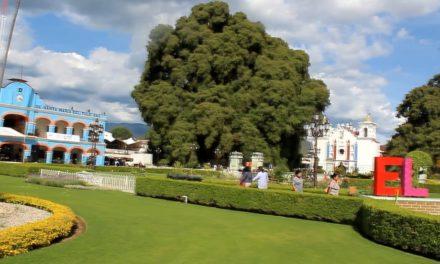 Fiesta del Árbol del Tule