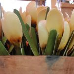 Cucharilla, un cubierto natural de la Mixteca