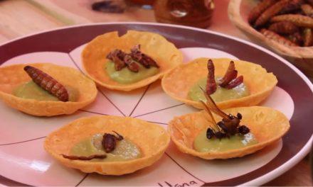 Buen Bicho y Sabandija, la comida exótico con insectos en Oaxaca
