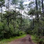 Ecoturixtlán, la naturaleza en su apogeo